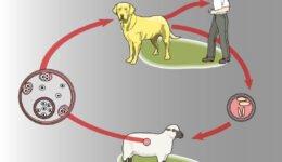 Zoonotik Ve Vektörel Hastalıklar Nedir? Nasıl Bulaşır? Belirtileri?