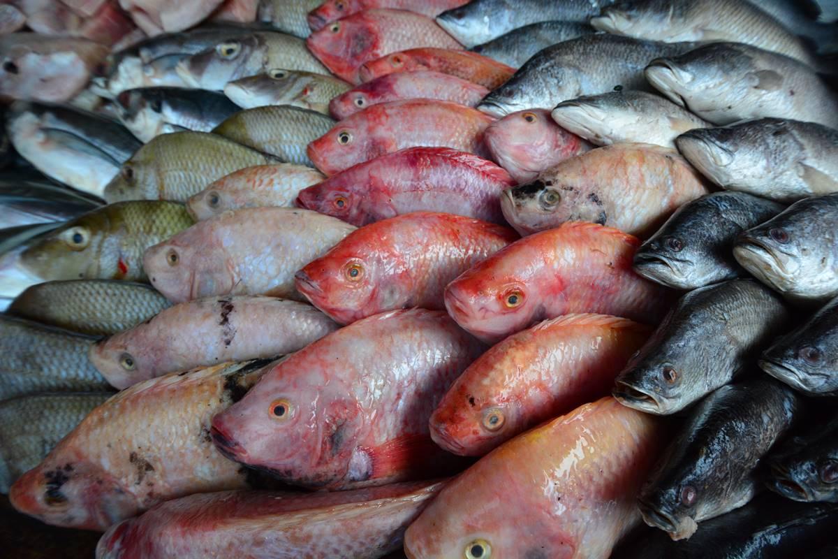 Kırlangıç Balığını Evde Temizlemek İçin Bunları Bilmelisiniz