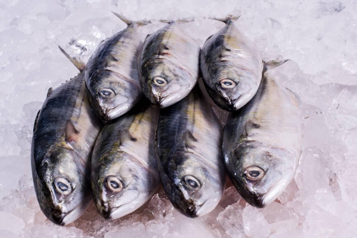Palamut Nasıl Temizlenir? Balığı Ayıklamanın Kolay Yolları