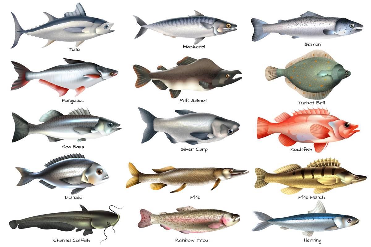 Taze Balık Nasıl Seçilir, Anlaşılır Masterchef Jürisinden Tüyolar!