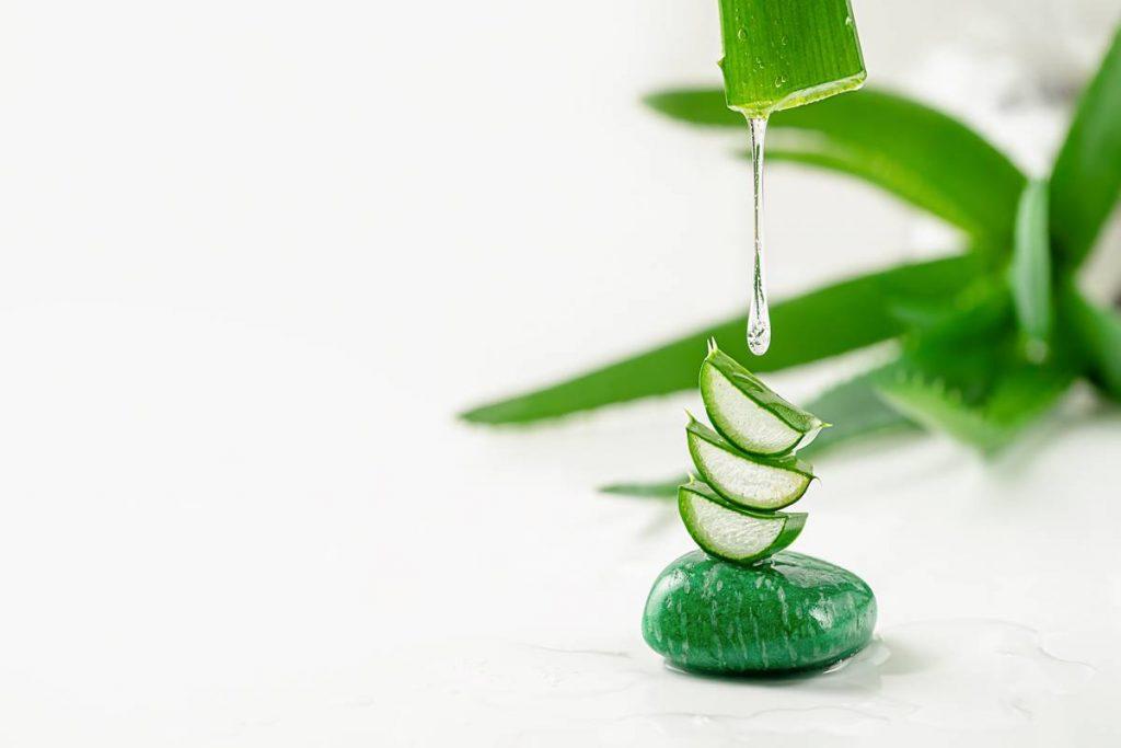 Aloe Vera Nedir? Nasıl Kullanılır?
