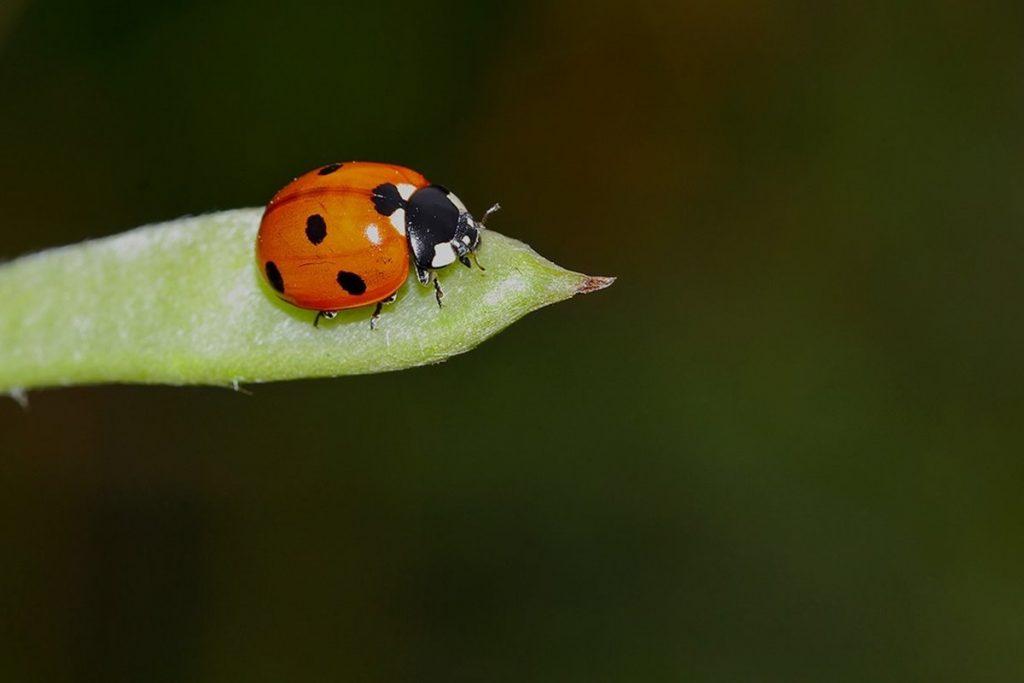 Uğur Böceği ile İlgili Sözler