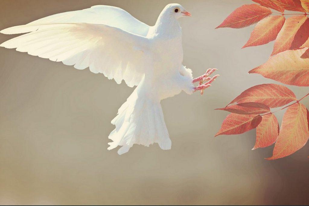 Barış İle İlgili Sözler
