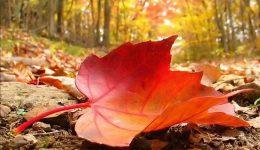 Ekim Ayı İle İlgili Sözler