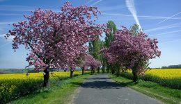 İlkbahar İle İlgili Sözler
