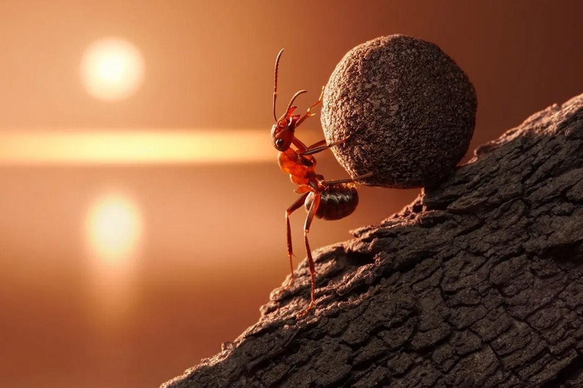 Karıncalar ile İlgili Sözler