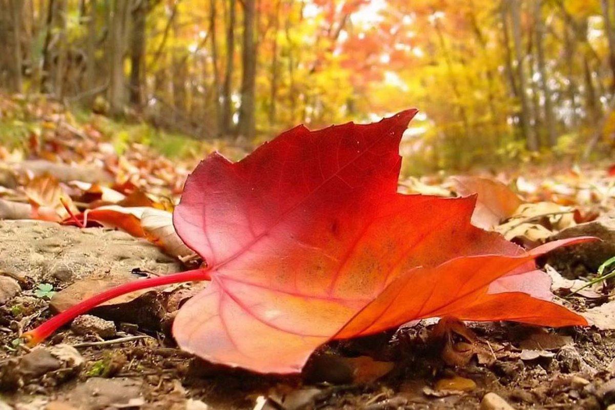 Yaprak ile İlgili Sözler