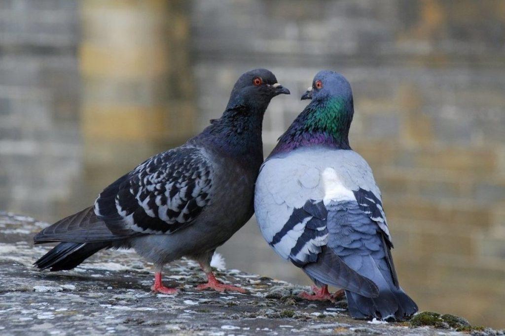 Güvercin İle İlgili Sözler