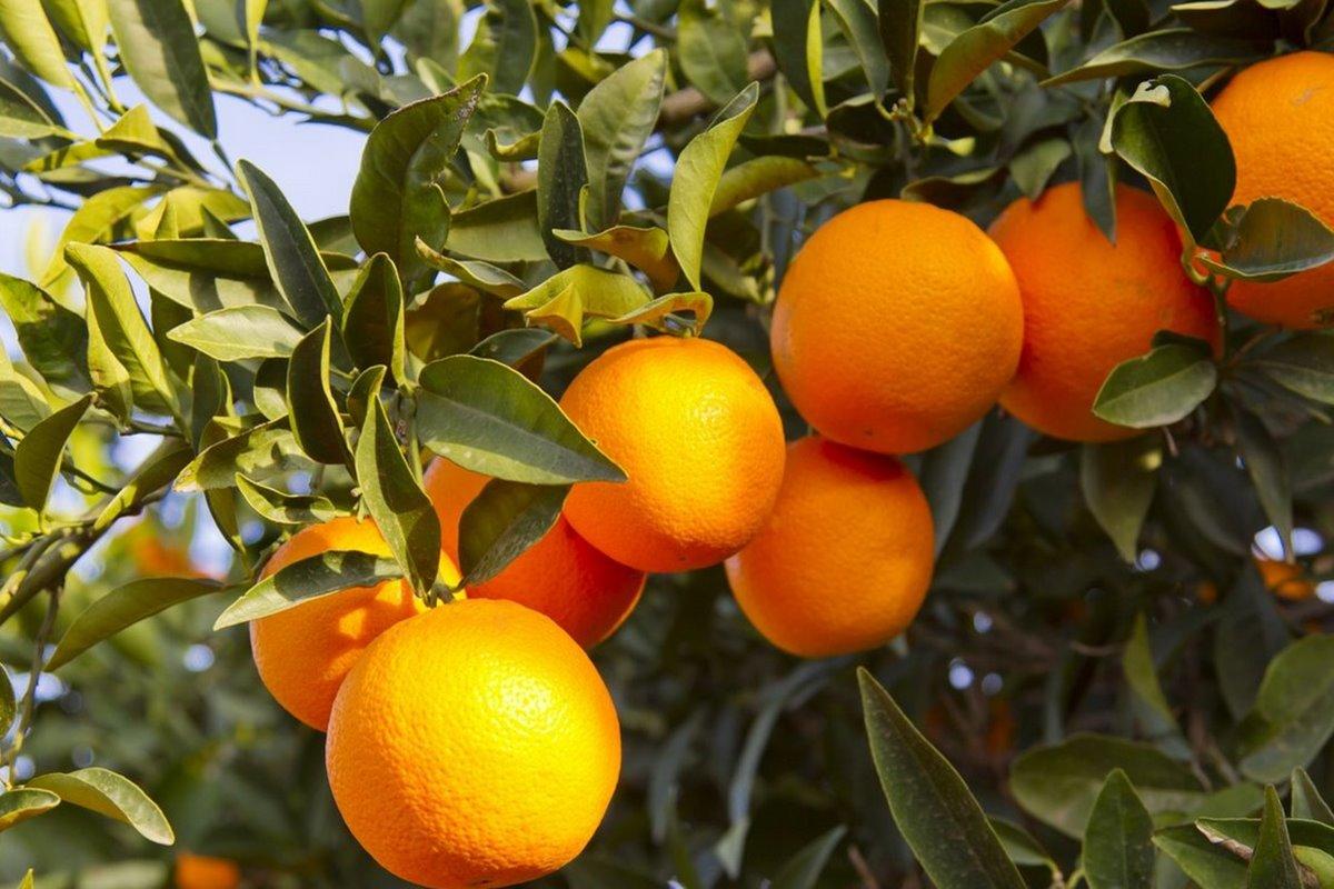 Portakal İle ilgili Sözler