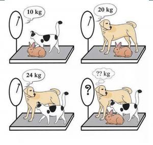 Resimdeki hayvanların ağırlığı kaçtır?