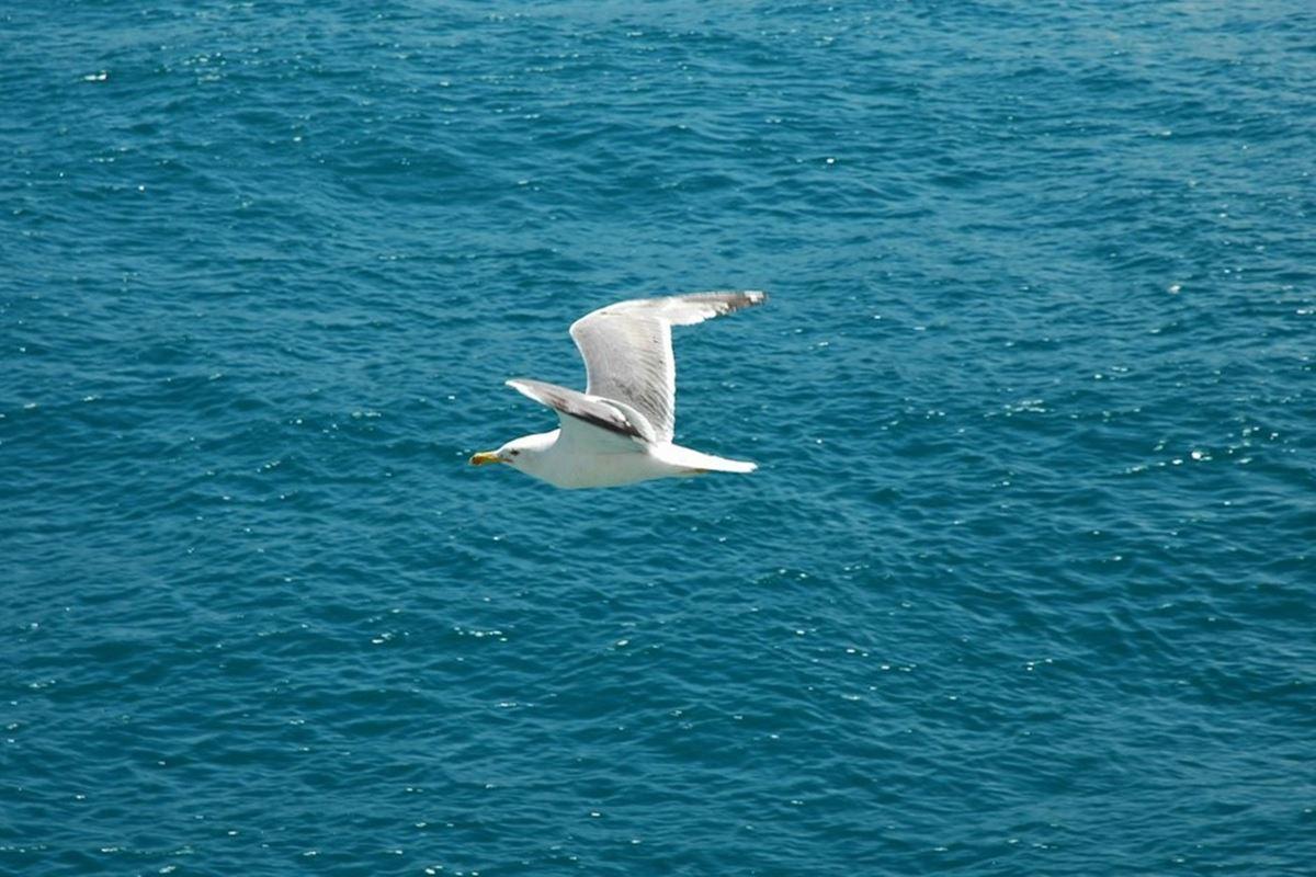 Mavi Tarla Üstünde Beyaz Güvercin Yürür Bilmecesi