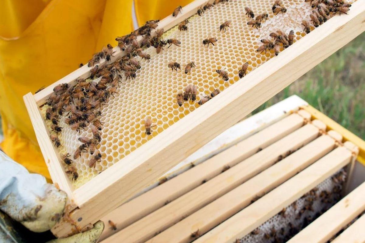 Arılar Hangi Kovana Bal Yapmaz Bilmecesi
