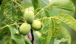 Ağaç Üstünde Kilitli Sandık Bilmecesi