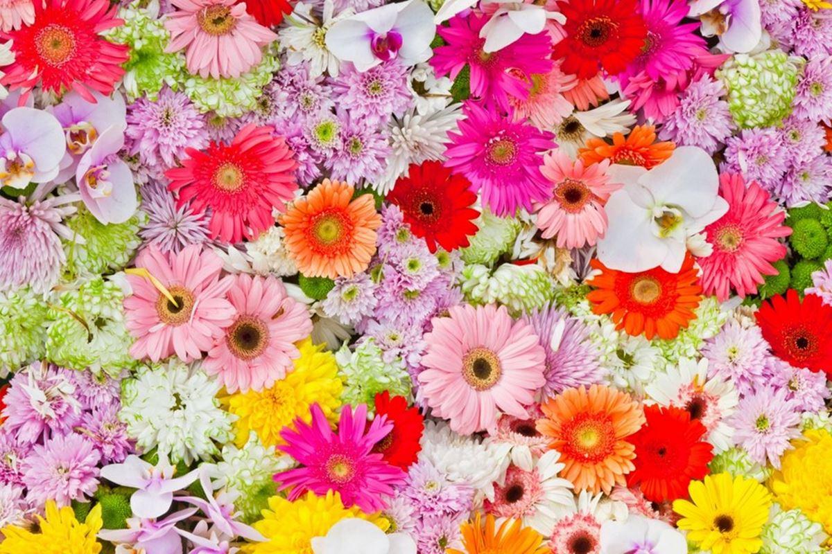 Çiçek ile İlgili Bilmeceler