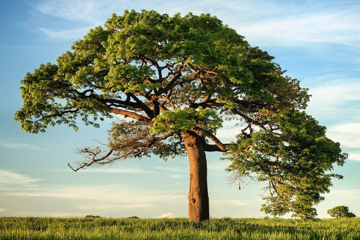 Ağaç ile İlgili Bilmeceler