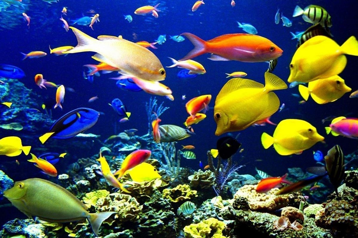 Balık ile İlgili Bilmeceler