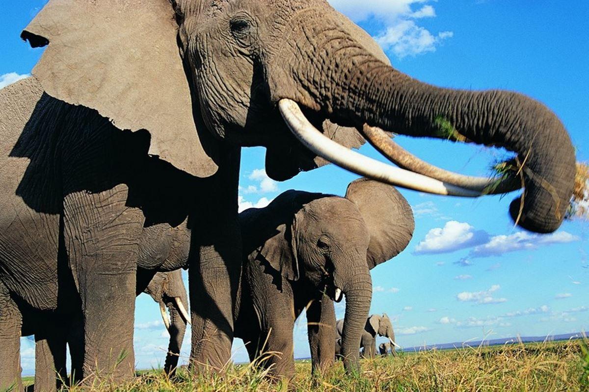 Fil ile İlgili Bilmeceler
