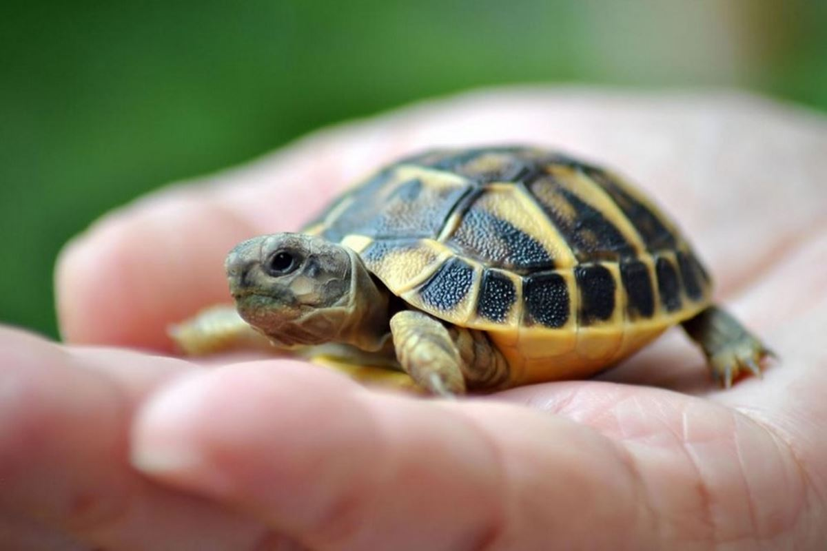 Kaplumbağa ile İlgili Bilmeceler-1
