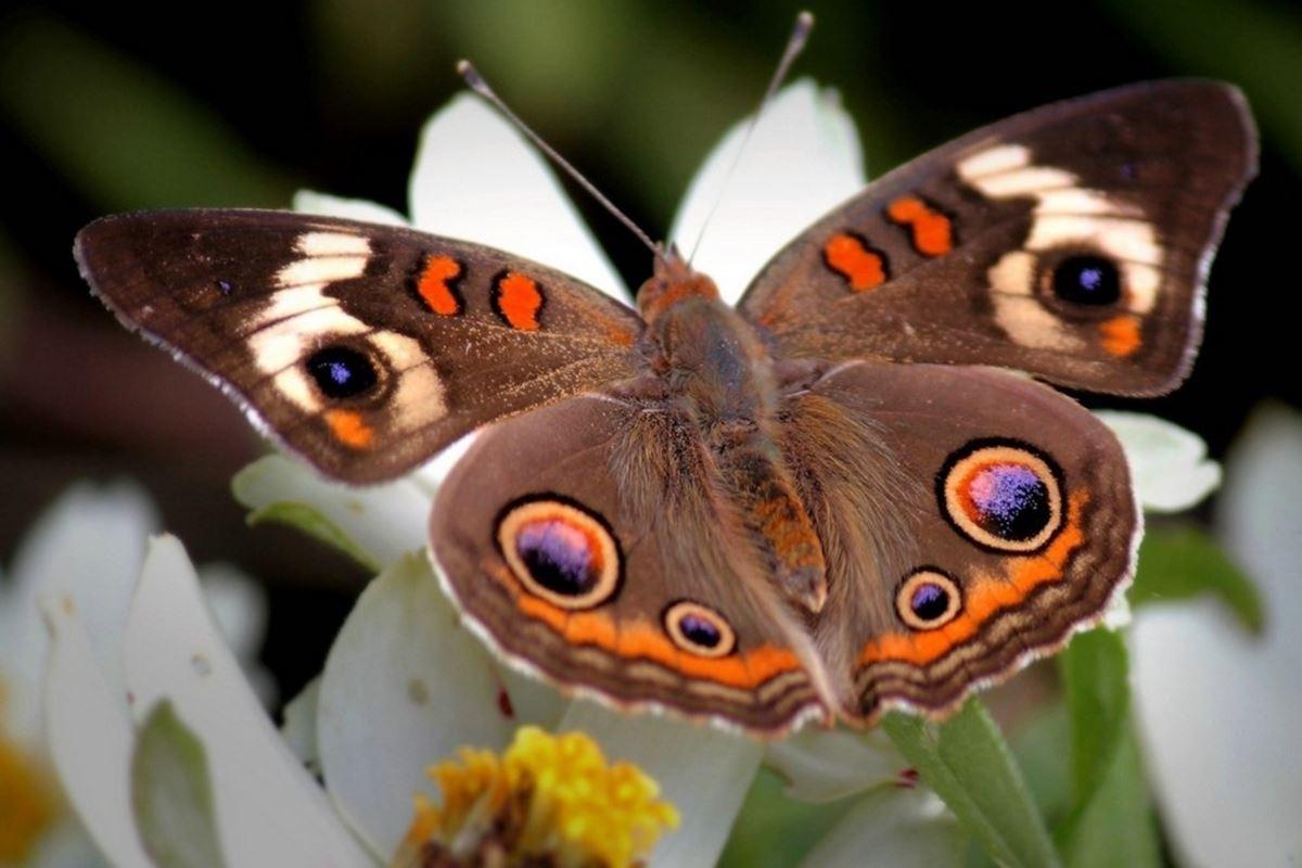 Kelebek ile İlgili Bilmeceler