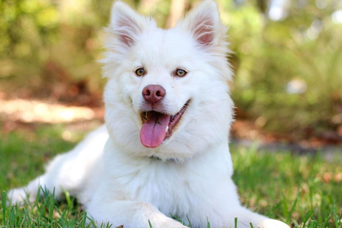 Uçan Köpeğe Ne Denir? Bilmecesi