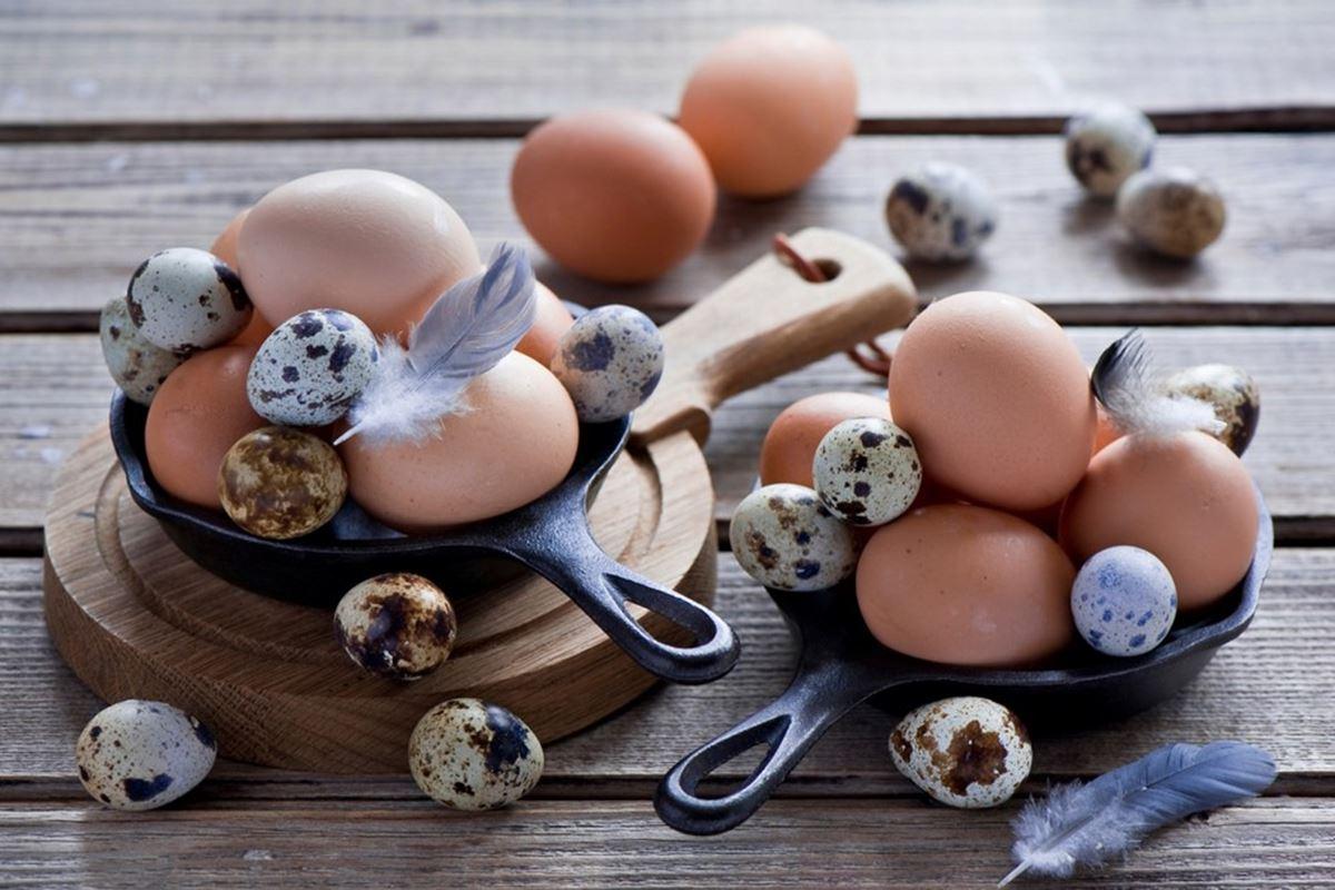 Yumurta ile İlgili Bilmeceler