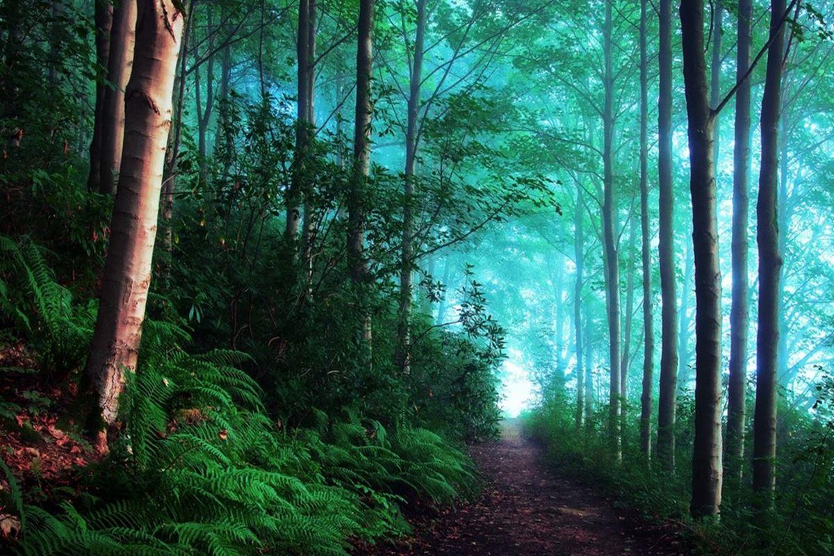 Orman ile İlgili Bilmeceler