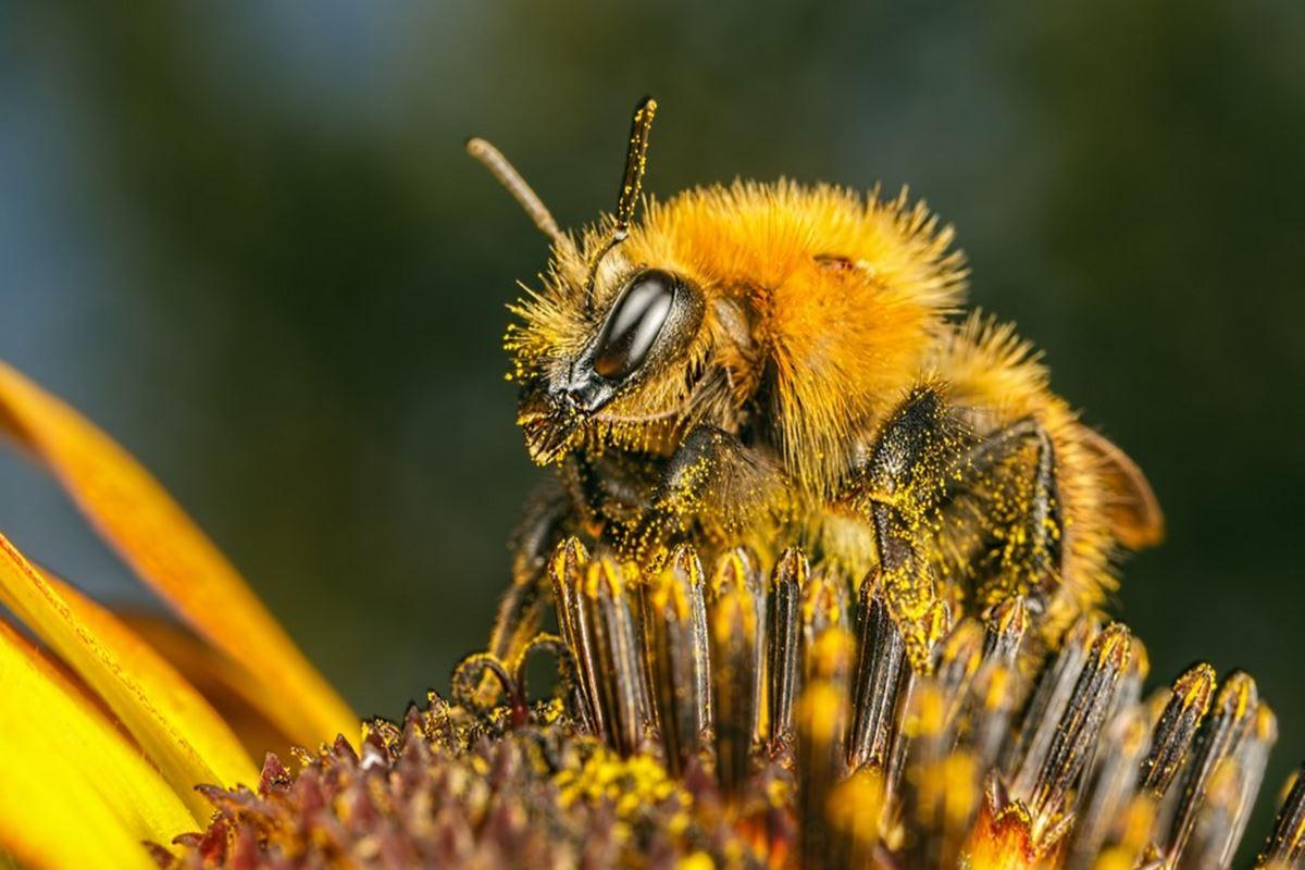 Arı ile İlgili Bilmeceler
