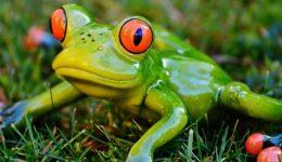 Kurbağa ile İlgili Bilmeceler – 10'dan fazla