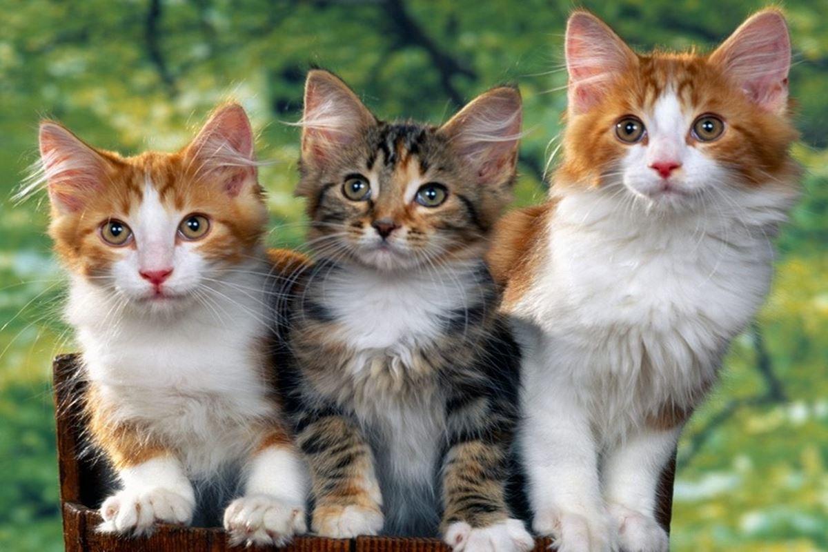 Kedi ile İlgili Bilmeceler