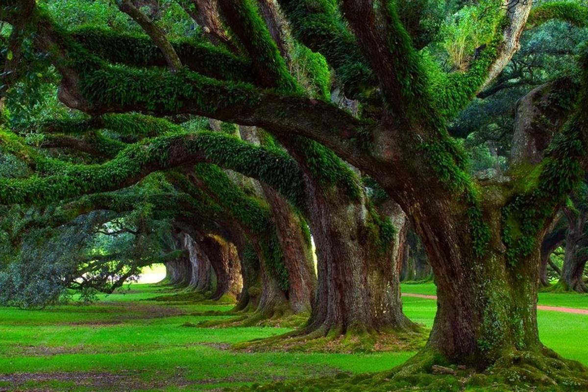 Benim Bir Ağacım Var Her Gün Yaprak Döker Bilmecesi