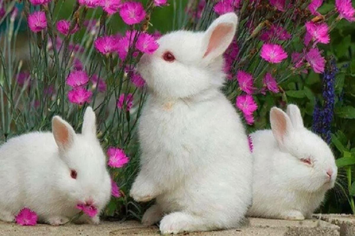 Tavşan ile İlgili Bilmeceler